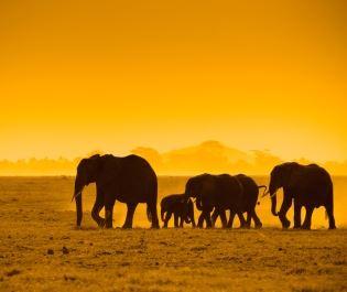 Chyulu elephant