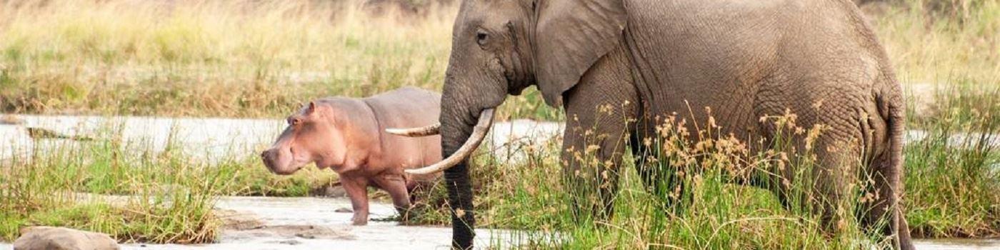 Azura Selous Game Reserve animals
