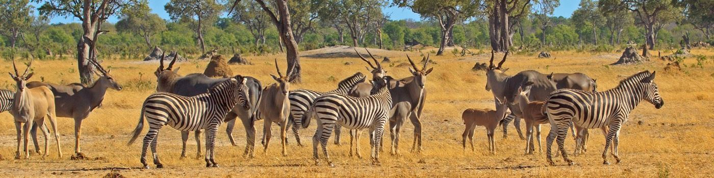 Wildlife in South Luangwa - Getty