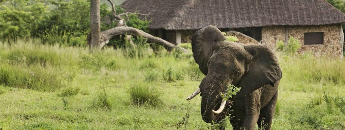 Beho Beho elephant outside guest cottage