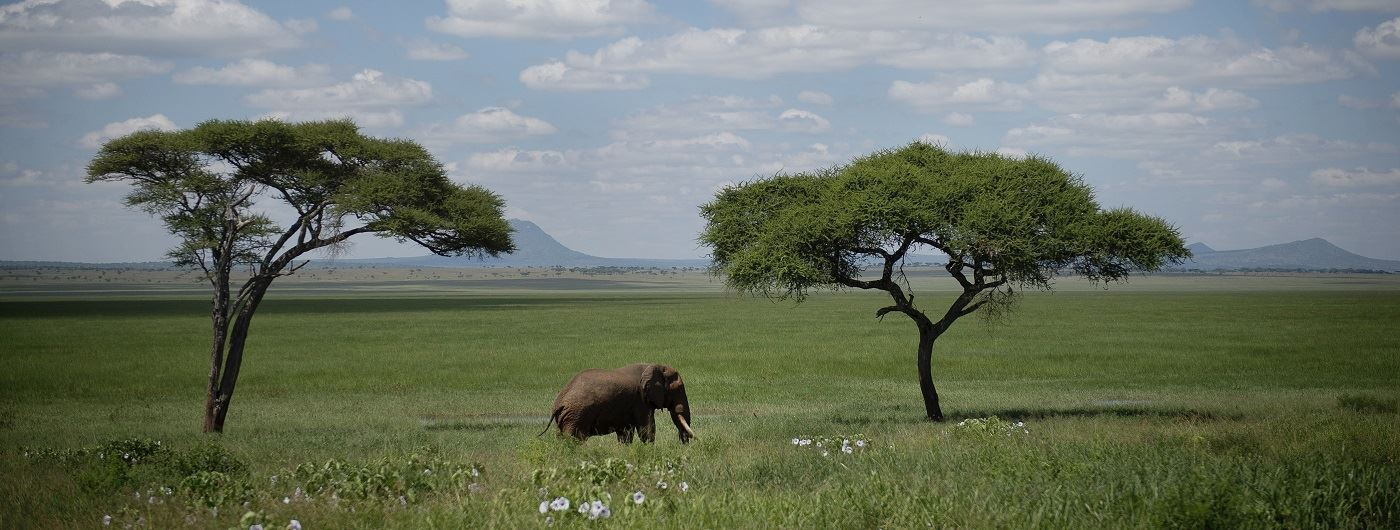 Elephants in Tarangire National Park - Eliza Deacon