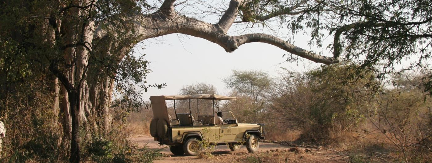 Jongomero Safari Camp game drives