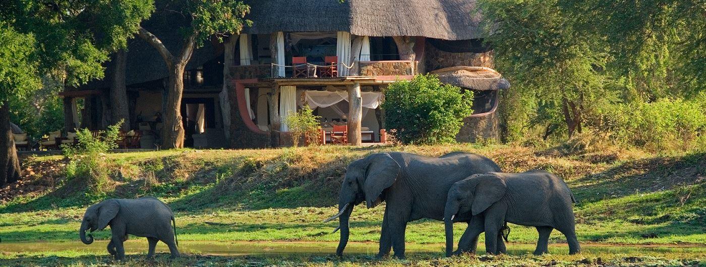 Luangwa Safari House elephant