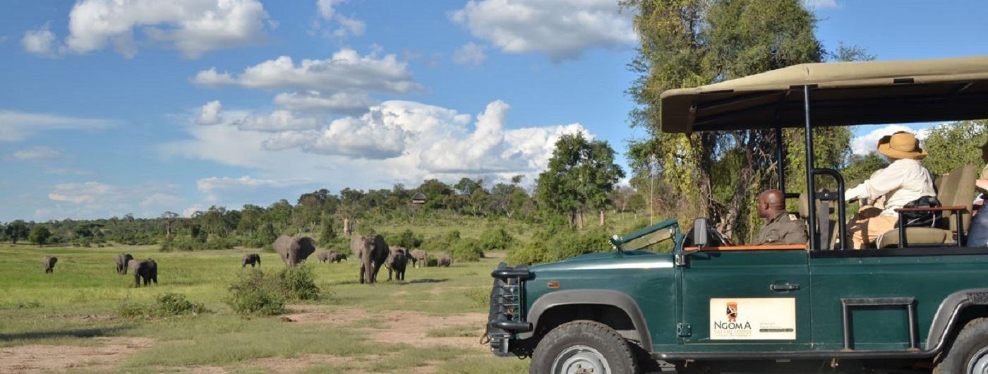 Ngoma Safari Lodge game drive