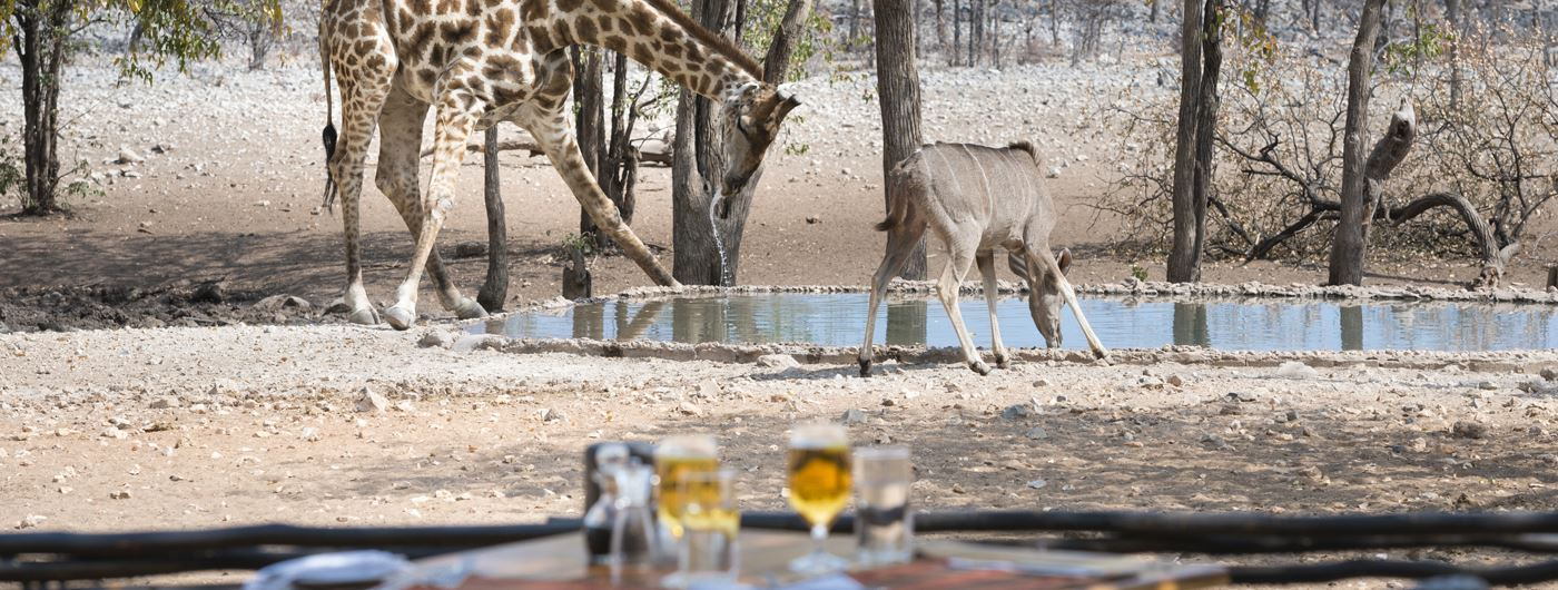 Enjoying a drink by the waterhole at Ongava Tented Camp ©️ Dr Olwen Evans
