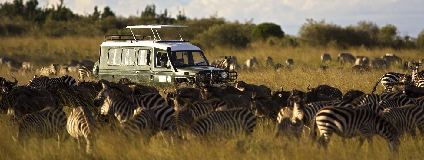 Safari vehicle with wildebeest and zebra