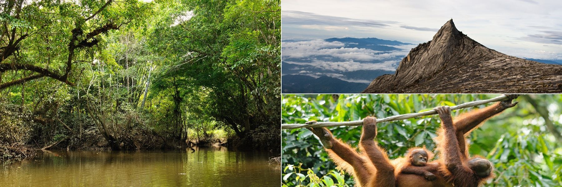 This Is Borneo