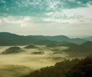 Getty Nyungwe Forest