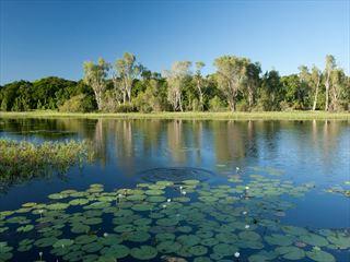 McCreadies Billabong near Litchfield National Park