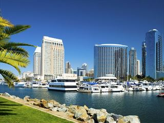 San Diego Skyline and Palm Tree