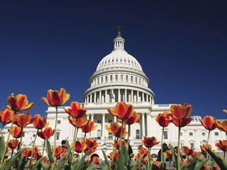 Tulips outside US Capitol Building