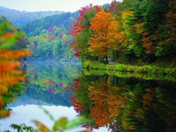 A beginner's guide to New England's fall colours