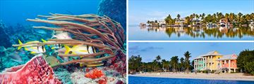 Diving in Cozumel, Reflections in the waters of Key West coast line & Colourful buildings along the Grand Cayman coast