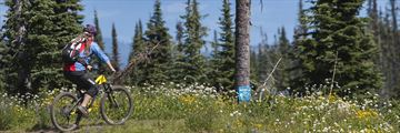 Mountain biking at Sun Peaks