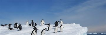 Adelie penguins in Antarctica