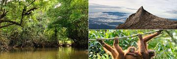 Jungle River, Kinabalu Peak and Orangutans, Borneo