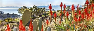 Santa Barbara flora and cacti