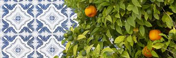 Portugese tiles and citrus