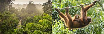 Sepilok Rainforest Sanctuary in Borneo