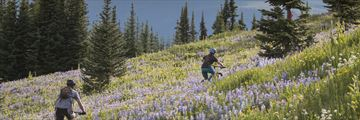 Cycling through Alpine blossom at Sun Peaks