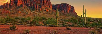 Desert cacti near Phoenix