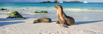 Galapagos sea lion resting on the beach