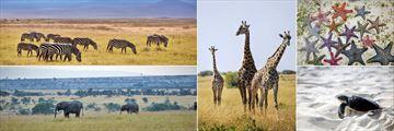 Diamonds La Gemma dell'Est, Safari Excursion and Wildlife