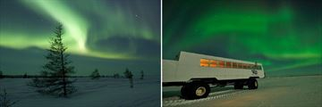 Manitoba Northern Lights & Tundra Buggy Experience