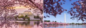Washington D.C's sights in the Spring