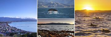 Scenery and Wildlife in Kaikoura, South Island