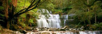 Liffey Falls, Tarkine region, Tasmania