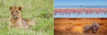 Lion and Nakuru National Park rhinos & flamingos