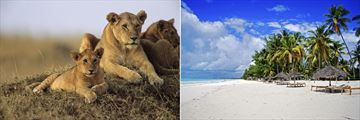 Lions in the Masai Mara & Zanzibar Beach