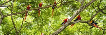 Macaws in Guanacaste