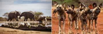 Madikwe wildlife