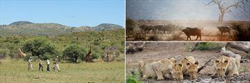Madikwe walking safari & wildlife sightings