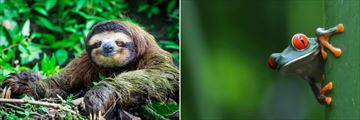 Sloths and tree frogs in Costa Rica