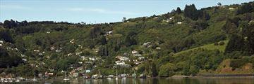 Otago Bay, Dunedin