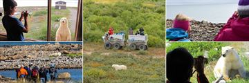 Polar Bear Viewings (Credit: Churchill Wild)