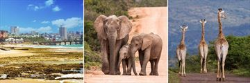 Port Elizabeth, Addo Elephant Park & Pumba Private Game Reserve