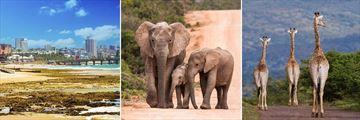 Port Elizabeth, Addo Elephant Park & Pumba Private Game Reserve