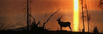 Wildlife in the American Rockies' prairies