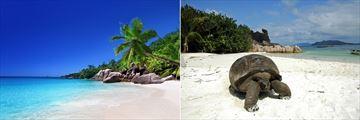 Beach & Giant Tortoise, Praslin