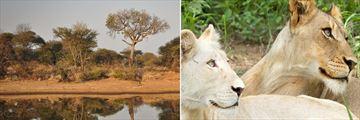 Timbavati Reserve