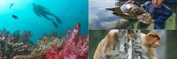 Gaya Island Resort wildlife activities