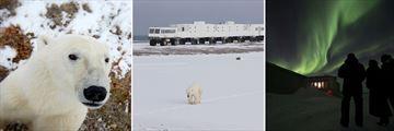 Polar Bear sights from Tundra Buggy & Northern Lights in Churchill, Manitoba