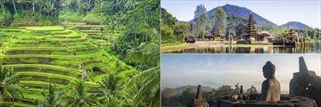 Ubud rice paddies, Ulun Danu temple & Borobudur temple, Bali