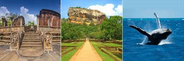 Uga Bay, Polonnaruwa Tour, Sigiriya Rock Fortress and Whale and Dolphin Watching