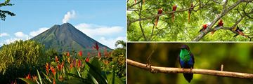 Arenal Volcano and tropical birds in Costa Rica