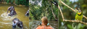 Villa Samadhi, Travels with Samadhi Daytrips - Elephant Sanctuary, Kuala Gandah Taman Negara and Fraser Hill Birdwatching